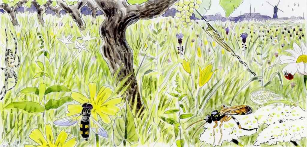Biodiversité dans les vignes - illustration d'Olivier Loir